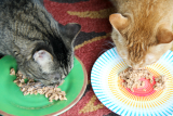 Healthy diet - The Furry Side of Family Fresh Meals